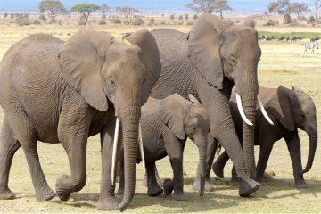 Faire un voyage au Kenya sous le signe de l'écotourisme