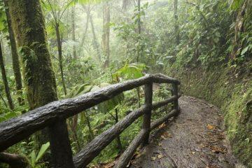 Séjour au Costa Rica : explorer la Suisse de l'Amérique centrale